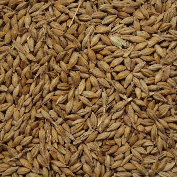 Whole Barley